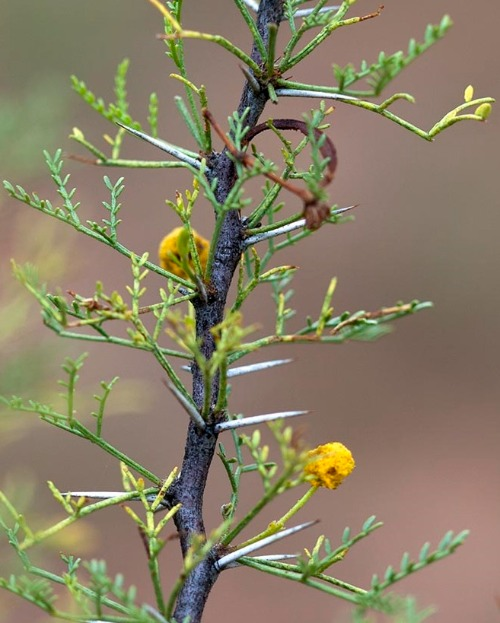 Why are small leaves an adaptation to a desert environment? an adaptation to desert environment